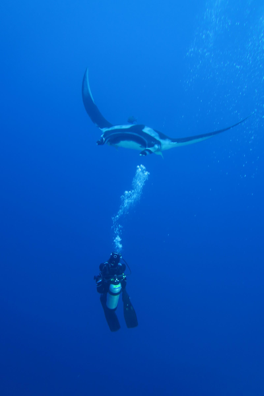Amazing check dive - Manta City! - Nautilus Liveaboards