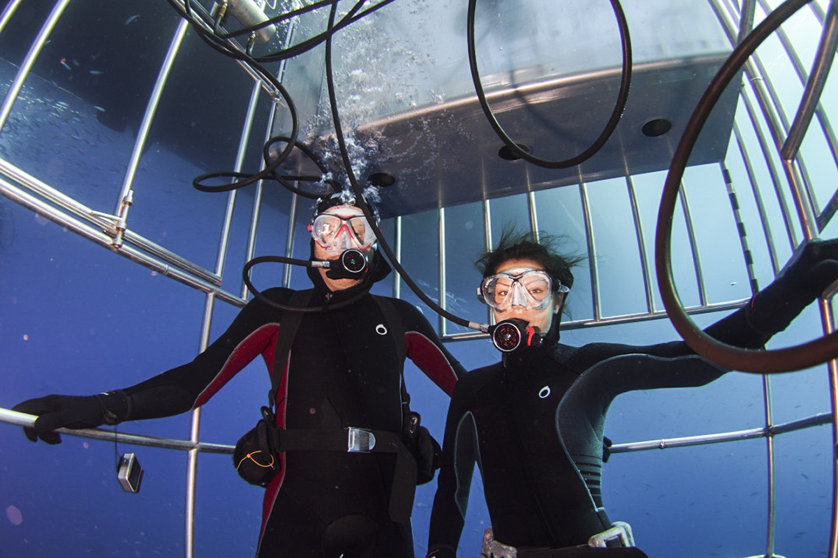 Guests in the Nautilus Shark Diving Cages