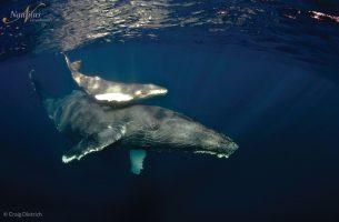 Socorro-humpback-whale-002