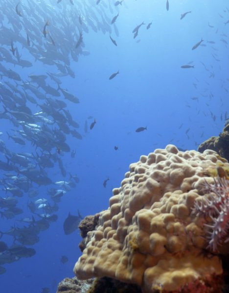 The Canyon corals