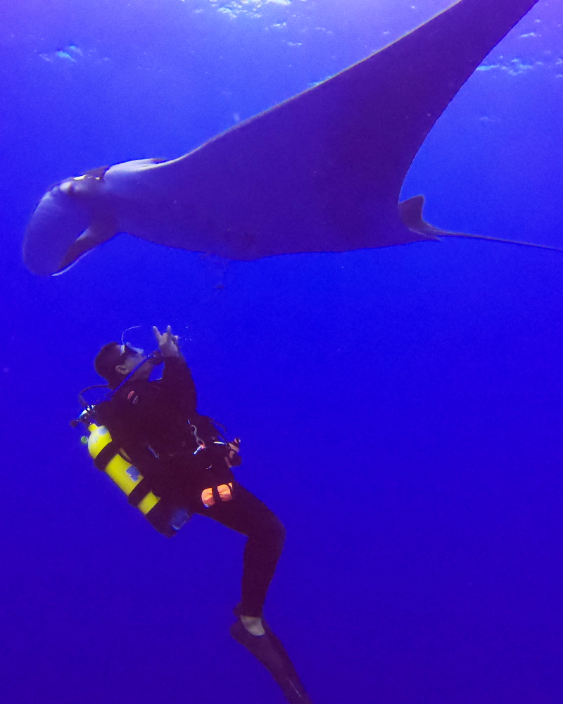 Dive with Manta