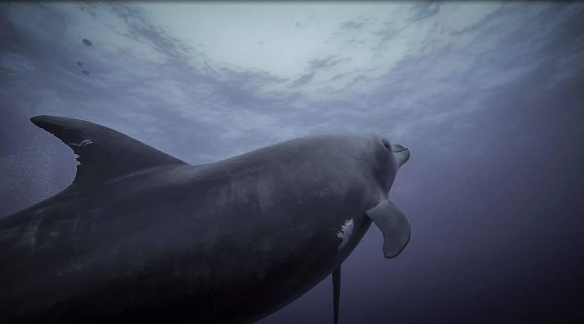 Playfiull dolphin at socorro - Ecotourism